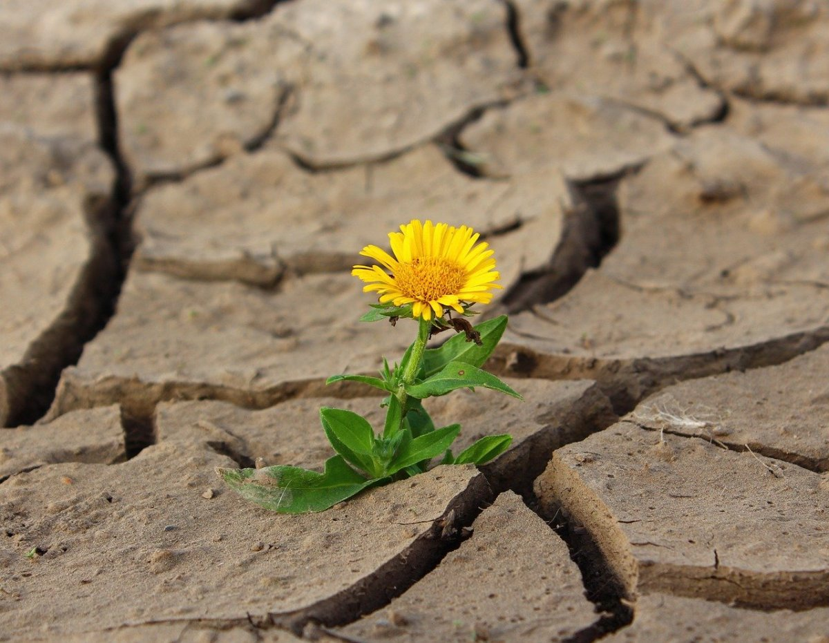 Avoid Relationship Escapes By Embracing theDrought